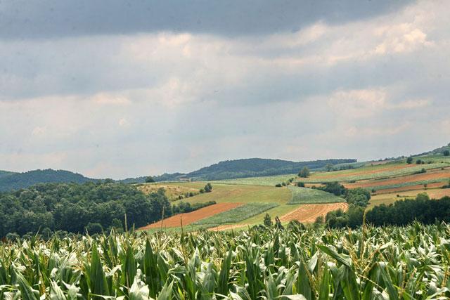 Opština Gornji Milanovac poljoprivrednicima dala bespovratna podsticajna sredstva