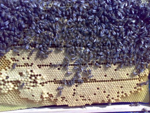 Mladim pčelarima na poklon košnice od grada Šapca