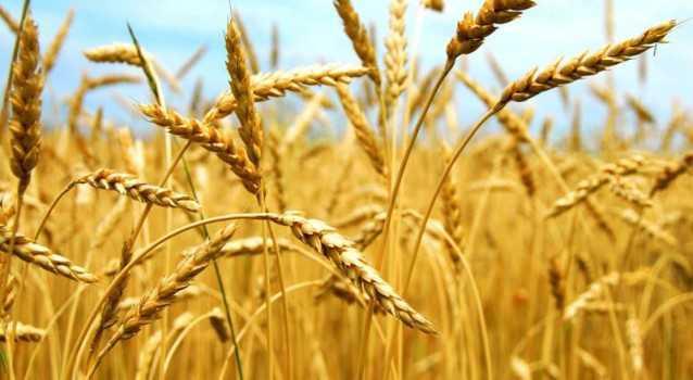 Suficit u razmeni poljoprivrednih i prehrambenih proizvoda sa svetom veći za oko 50%