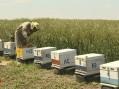 Šabački pčelari se nadaju solidnoj zaradi