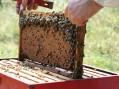Završena prva faza projekta podrške mladim pčelarima u Srbiji