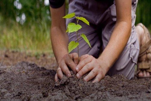 Pokrenuta inicijativa da svako novorođenče u Nišu dobije svoje drvo