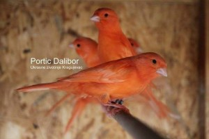 dalibor-daca-portic-5