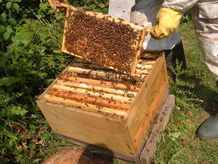 Još osam pčelara iz Čajetina dobili pomoć u košnicama