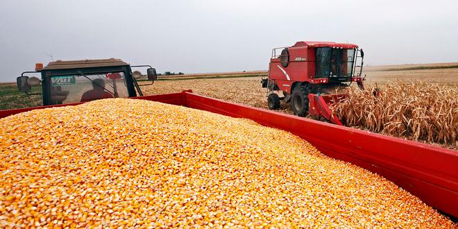 (NE) ZASEJANA SRBIJA – Stvarno stanje poljoprivrede u Srbiji – Četvrti čin
