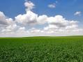 (NE) ZASEJANA SRBIJA – Srbija i poljoprivreda? – Treći čin