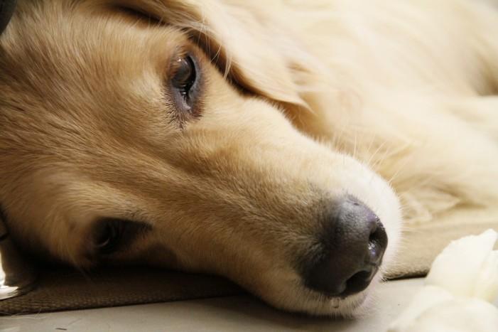 Čuvajte vašeg psa od otrova