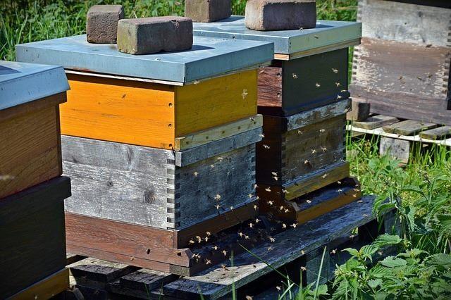 Oktobarska priprema pčela za zimu