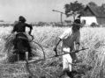 Žetva i vršidba na somborskim bunjevačkim salašima