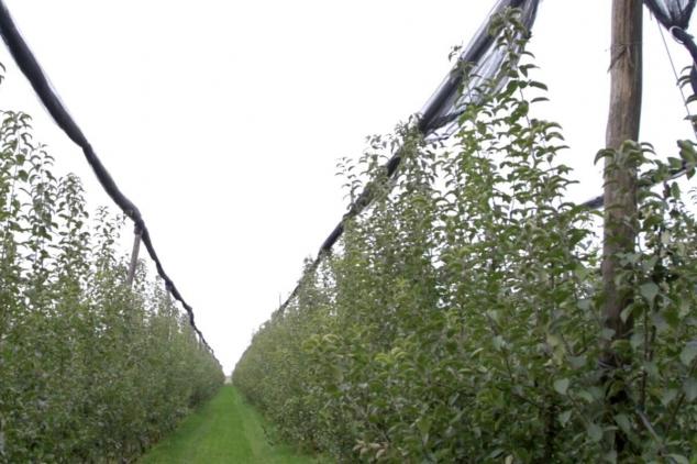 Moderna tehnologija u voćnjaku – siguran prinos