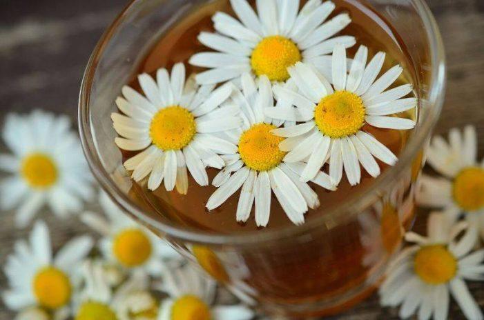 Najpopularnije vrste čajeva kod nas